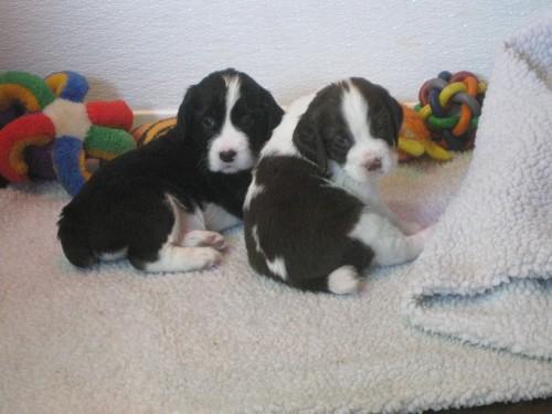 Pups3